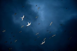 rich blue sky with a brighter blue in the center, ringed by darker jewel blue tones. arctic birds fly across the sky, their white bodies punctuating the sky.