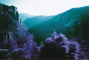 blurry pink lilac pressed against the ridge of a road in front of mountains aqua green from afternoon light.