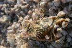 image of fish bones on sand, stones, and fish skin.