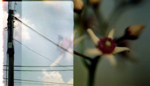 image of a telephone line and a blue sky overlaid an image of a flower half in bud